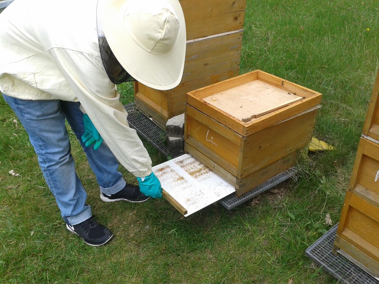 Die Kontrolle der Milbenbretter